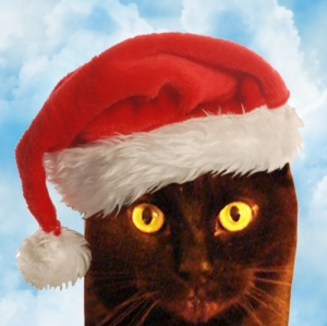 santa's_cat-in-his-christmas-hat